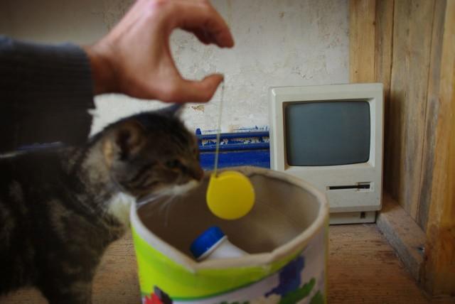 Lol.Cat.time